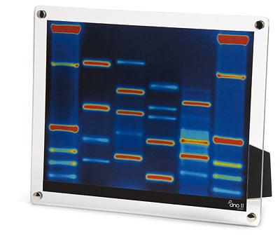DNA Portrait1